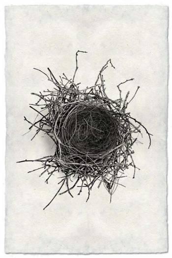 Nest Study 2