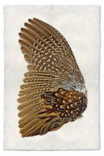 Ring neck pheasant wing-left Nepalese paper 20x30